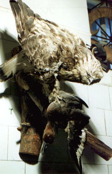 Это фото находится также в галереях: домашнии птицы.